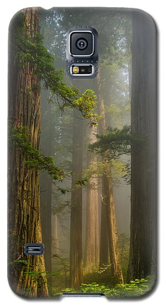 Center Of Forest Galaxy S5 Case