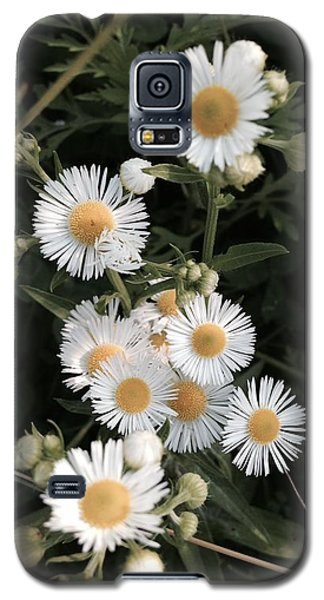 Chamomile Flowers. Galaxy S5 Case