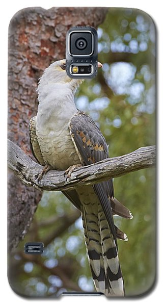 Channel-billed Cuckoo Fledgling Galaxy S5 Case by Martin Willis
