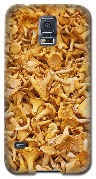 Chanterelle Mushroom Galaxy S5 Case by Anonymous