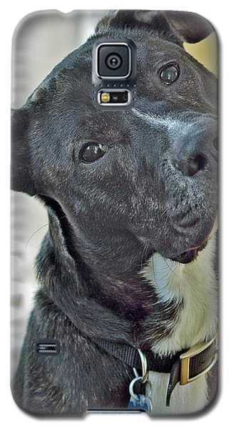 Galaxy S5 Case featuring the photograph Charlie by Lisa Phillips