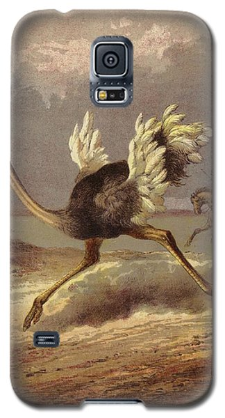 Chasing The Ostrich Galaxy S5 Case by English School