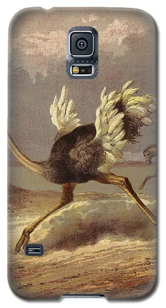 Chasing The Ostrich Galaxy S5 Case