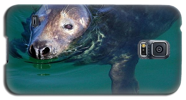Chatham Harbor Seal Galaxy S5 Case by Stuart Litoff