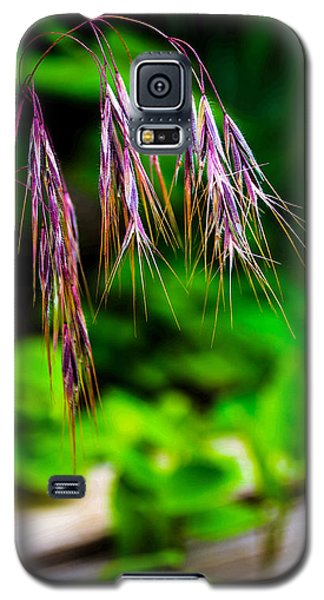 Galaxy S5 Case featuring the photograph Cheating Purple by Rhys Arithson