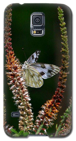 Checkered White On An Indigo Galaxy S5 Case