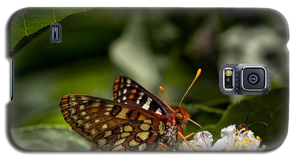 Checkerspot Sipping Nectar Galaxy S5 Case