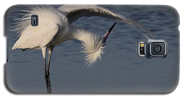 Checking For Leaks - Reddish Egret - White Form Galaxy S5 Case