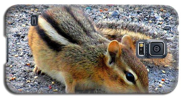 Cheeky Chipmunk Galaxy S5 Case