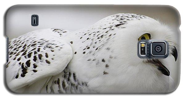 Cheeky Snow Owl Galaxy S5 Case