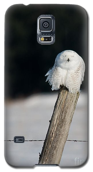 Cheeky Snowy Galaxy S5 Case
