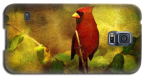 Cheery Red Cardinal  Galaxy S5 Case