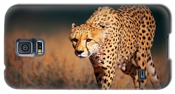 Cheetah Galaxy S5 Case - Cheetah Approaching From The Front by Johan Swanepoel