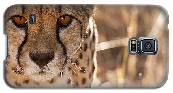Cheetah Conservation Fund, Namibia Galaxy S5 Case by Janet Muir