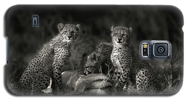 Cheetah Galaxy S5 Case - Cheetah Cubs by Mario Moreno