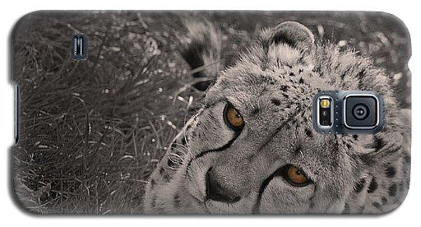 Cheetah Eyes Galaxy S5 Case by Martin Newman