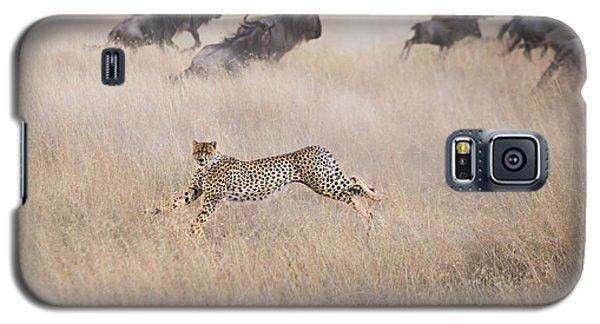 Cheetah Galaxy S5 Case - Cheetah Hunting by Jun Zuo