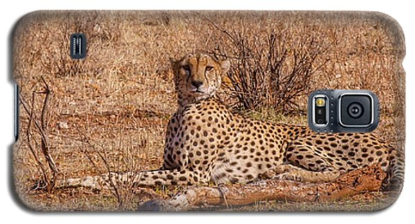 Cheetah In Repose Galaxy S5 Case