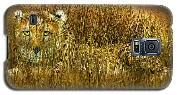 Cheetah - In The Wild Grass Galaxy S5 Case by Carol Cavalaris