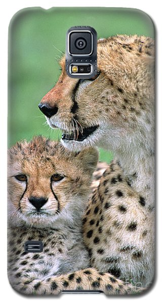 Cheetah Mother And Cub Galaxy S5 Case by Yva Momatiuk John Eastcott