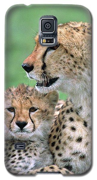 Cheetah Mother And Cub Galaxy S5 Case by Yva Momatiuk John Eastcott
