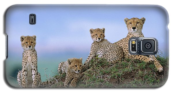 Cheetah Mother And Cubs Masai Mara Galaxy S5 Case by Yva Momatiuk John Eastcott
