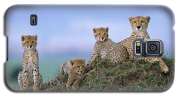 Cheetah Mother And Cubs Masai Mara Galaxy S5 Case by Yva Momatiuk John Eastcott