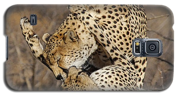 Cheetah Play Galaxy S5 Case