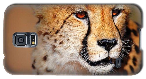 Cheetah Galaxy S5 Case - Cheetah Portrait by Johan Swanepoel