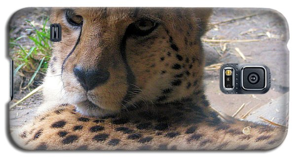 Cheetah Portrait Galaxy S5 Case