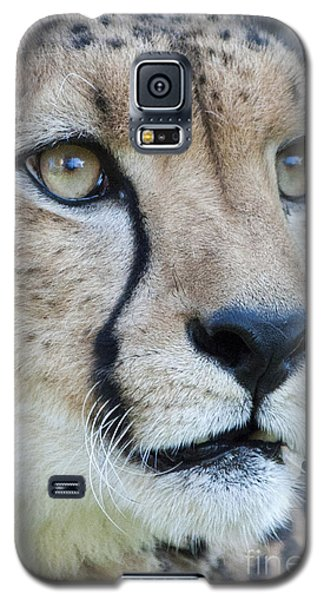 Cheetah Up Close Galaxy S5 Case