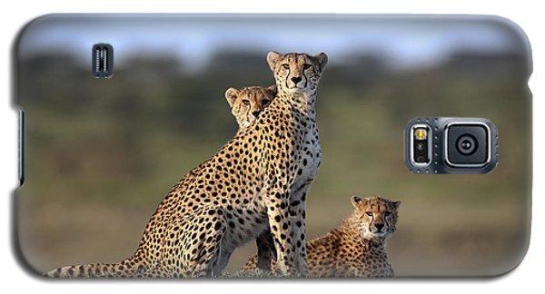 Cheetah Galaxy S5 Case - Cheetahs Family by Sultan Sultan Al