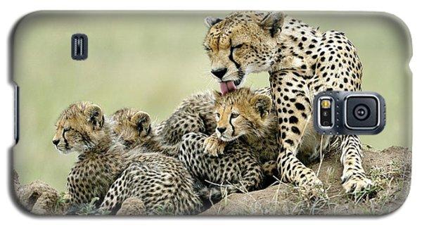 Cheetah Galaxy S5 Case - Cheetahs by Giuseppe D\\\'amico