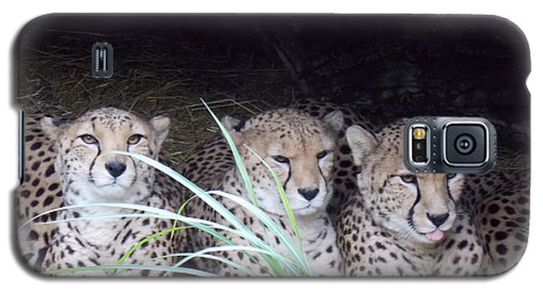 Galaxy S5 Case featuring the photograph Cheetahs by Martin Blakeley