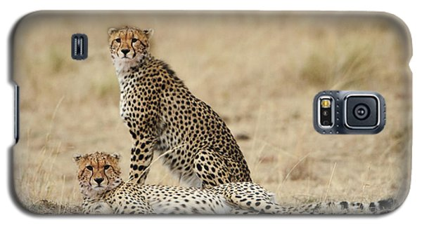 Galaxy S5 Case featuring the photograph Cheetahs Resting by Phyllis Peterson