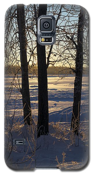 Chena River Trees Galaxy S5 Case by Cathy Mahnke