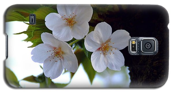 Galaxy S5 Case featuring the photograph Cherry Blossom by Andrea Anderegg