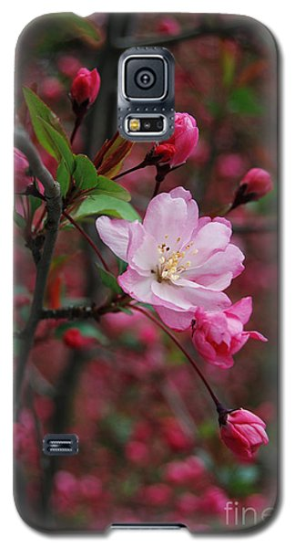Galaxy S5 Case featuring the photograph Cherry Blossom by Eva Kaufman