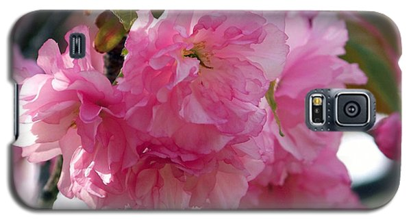 Galaxy S5 Case featuring the photograph Cherry Blossom by Gena Weiser