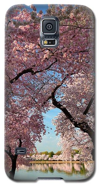 Cherry Blossoms 2013 - 024 Galaxy S5 Case