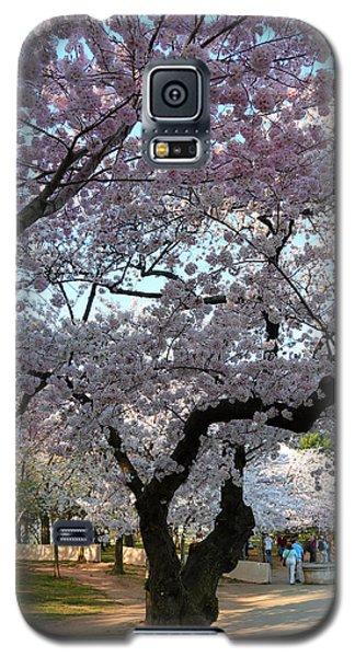 Cherry Blossoms 2013 - 044 Galaxy S5 Case