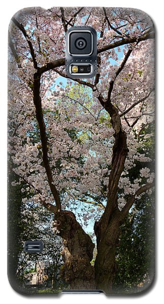 Cherry Blossoms 2013 - 056 Galaxy S5 Case
