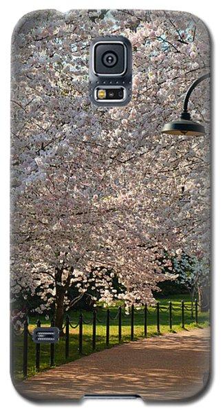 Cherry Blossoms 2013 - 060 Galaxy S5 Case