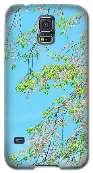 Galaxy S5 Case featuring the photograph Cherry Blossoms Falling by Rachel Mirror