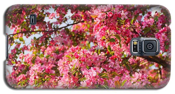 Cherry Blossoms In Washington D.c. Galaxy S5 Case by Mitchell R Grosky