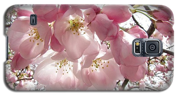 Cherry Blossoms Galaxy S5 Case by Jennifer Wheatley Wolf