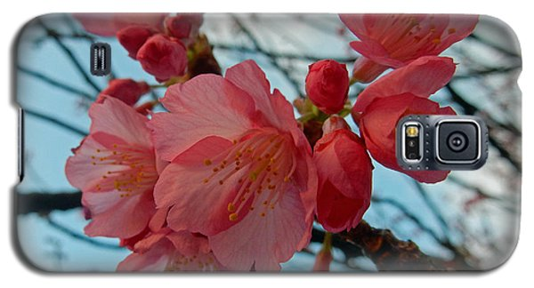 Cherry Blossoms Galaxy S5 Case by Pamela Walton
