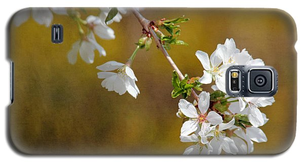 Galaxy S5 Case featuring the photograph Cherry Blossoms by Trina  Ansel