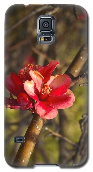 Cherry Blossoom Tree Galaxy S5 Case