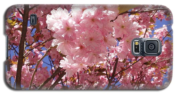 Cherry Trees Blossom Galaxy S5 Case